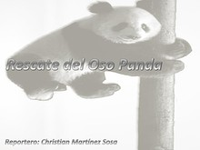 Rescate del Oso Panda