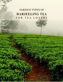 Various Types of Darjeeling Tea For Tea Lovers