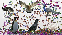 Learn birds Sounds and Names For Kids with colorful soccer balls Crow