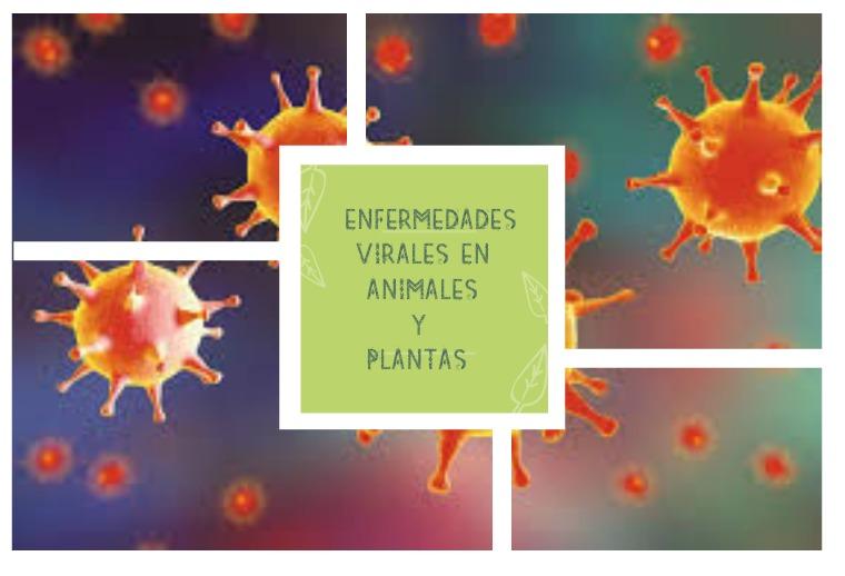 RECONOCIMIENTO DE ENFERMEDADES VIRALES EN ANIMALES Y PLANTAS 2